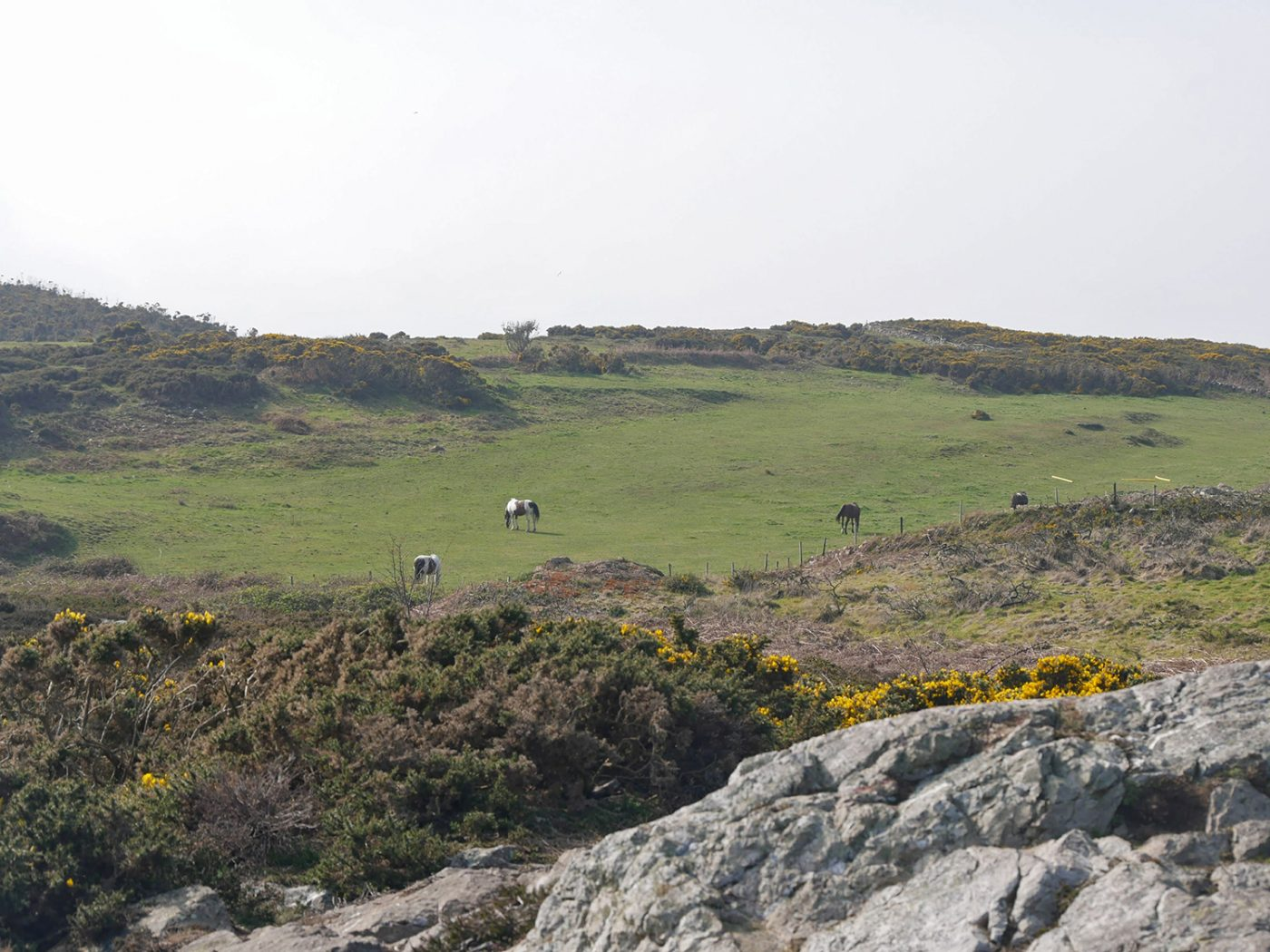 Landscape with horses - Howth Cliff Walk