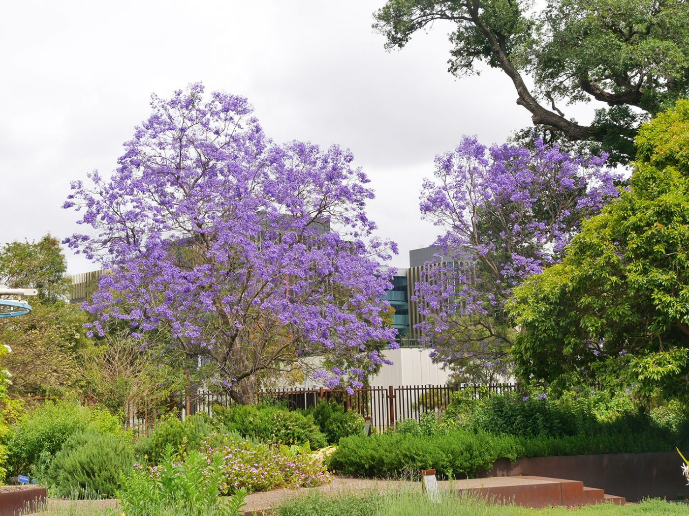 Blossom trees at the Botanical Gardens