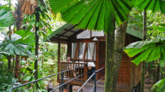 Daintree Wilderness Lodge - Cape Tribulation
