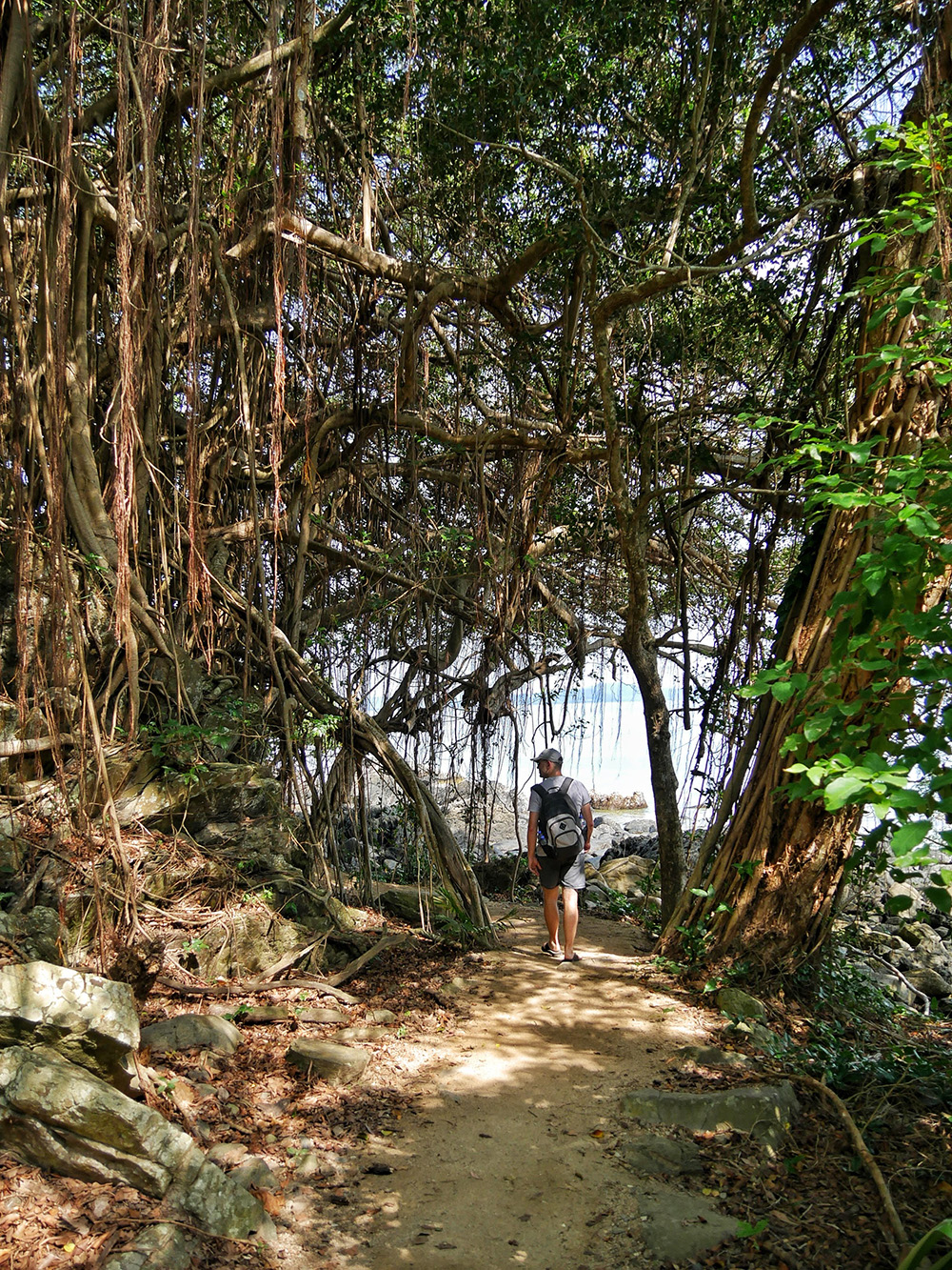 Walk under and through the lianas