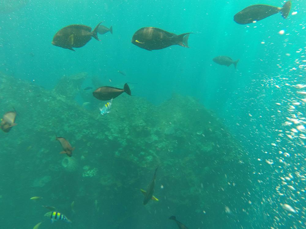 Snorkeling at Tulamben Shipwreck