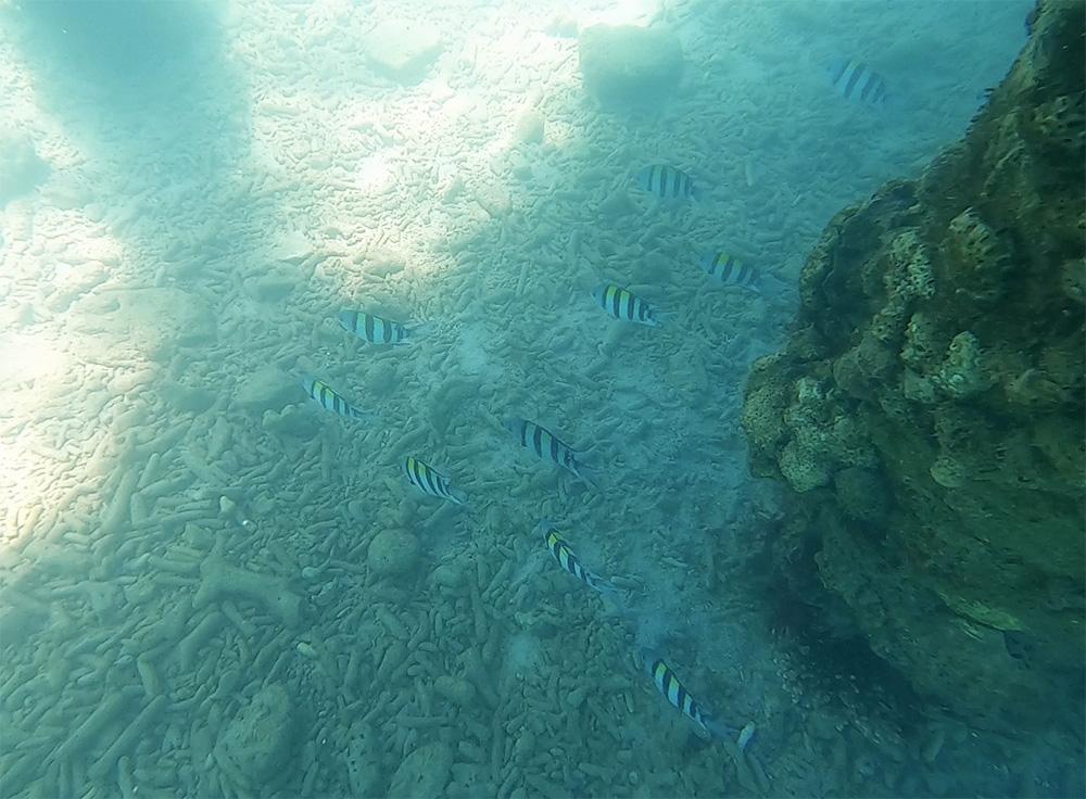 More colorful fish