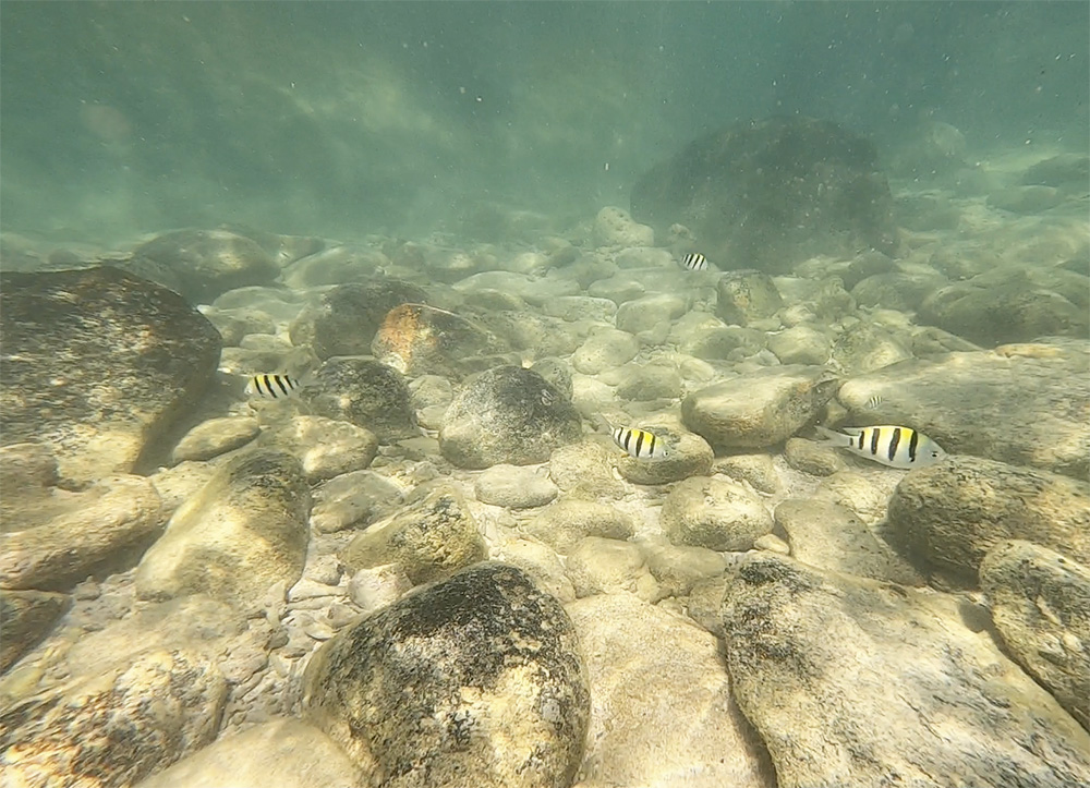 Snorkeling on the island is highly recommended